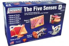 Lindberg 'The Five Senses' Model Kit image